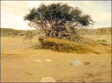 desertificacion.jpg